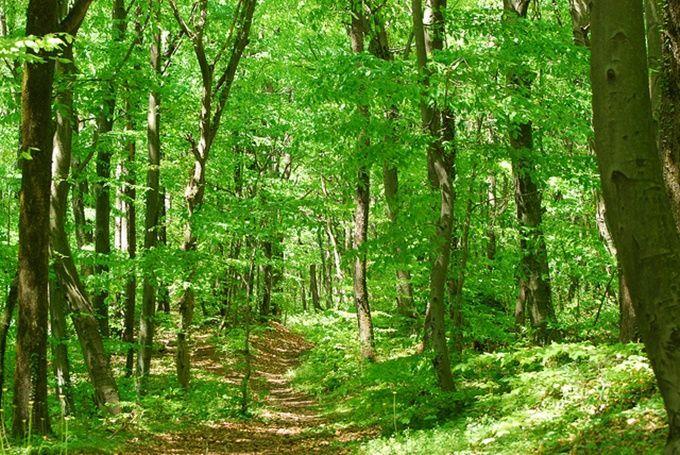 belgrade-forest-istanbul