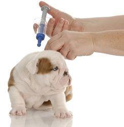 dog-vaccination