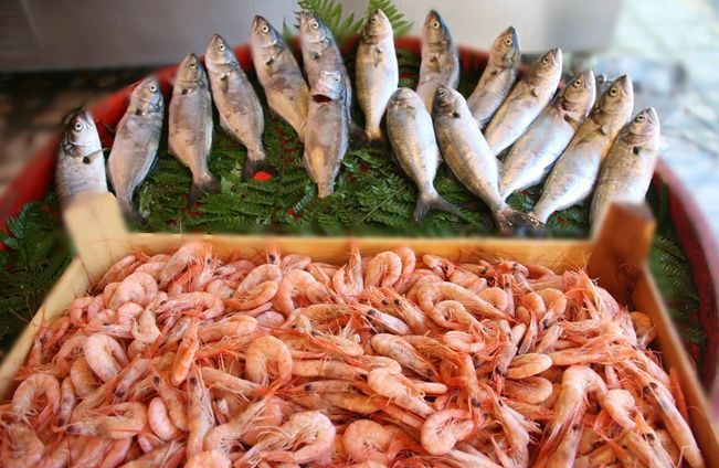 agva-istanbul-fish