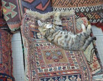arasta-bazaar-kitten