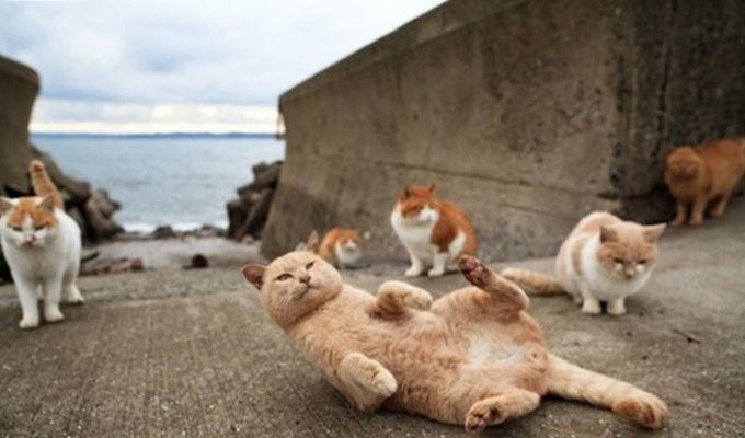 cihangir-cats-istanbul