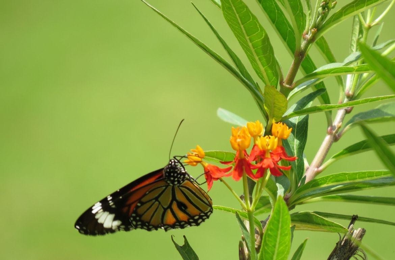 Yıldız Parkı'nda Beslenen Bir Kelebek