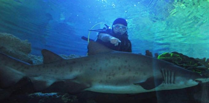 turkuazoo aquarium shark diving istanbul