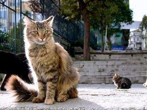 stray-cats-istanbul