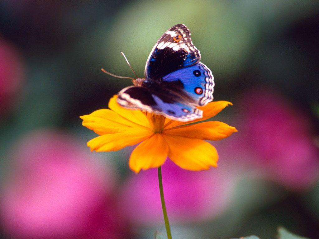 kelebek-ciftligi