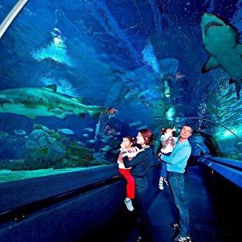 Sealife Aquarium Entrance Ticket